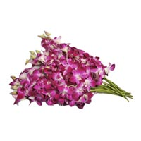 07703 - ORCHIDEES BLANCHE - VIOLACEES